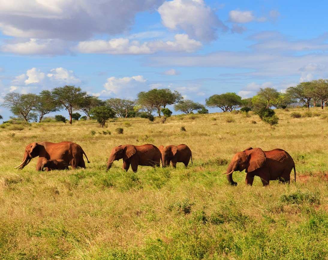 Safarivo : l'agence de voyage qu'il nous fallait